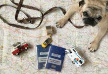 Mops auf Landkarte mit Ausweis