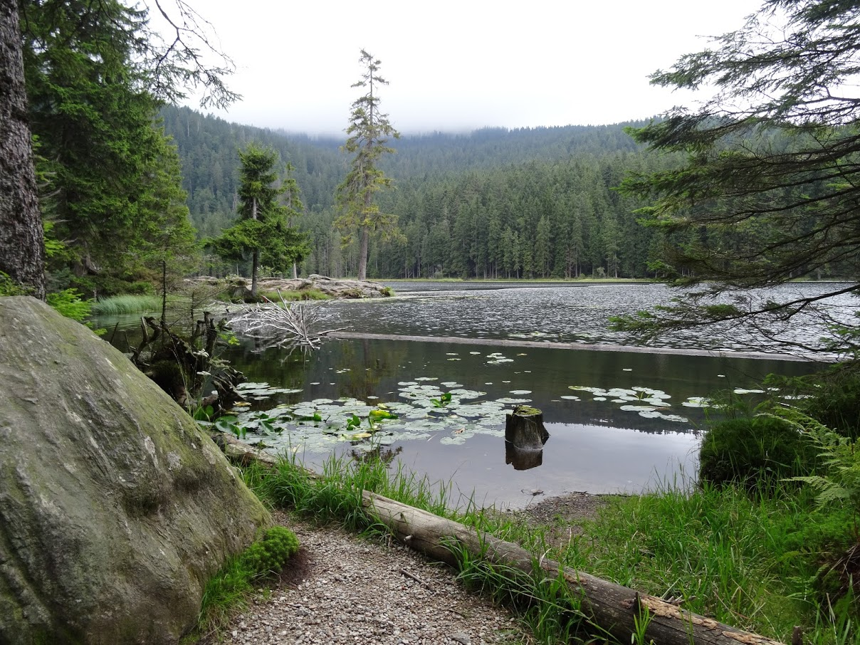 Der Arbersee Im Bayerischen Wald