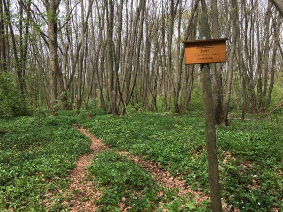 Riedholz - Fuchsbau