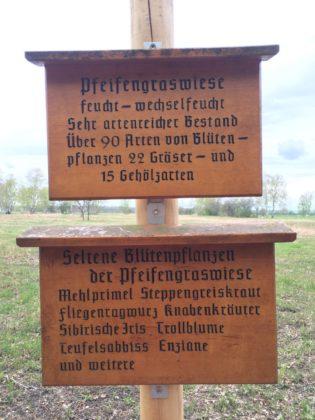 Pfeiffengraswiese im Riedholz