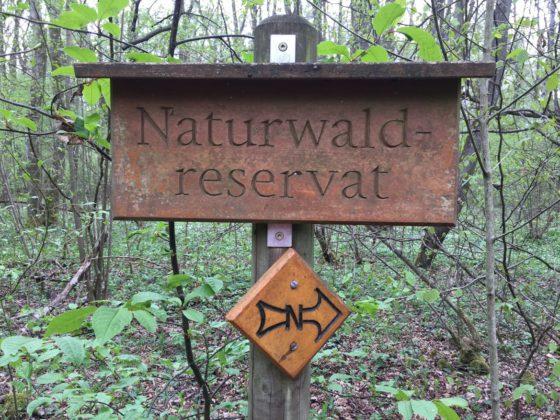 Wegweiser für den Naturlehrpfad im Riedholz
