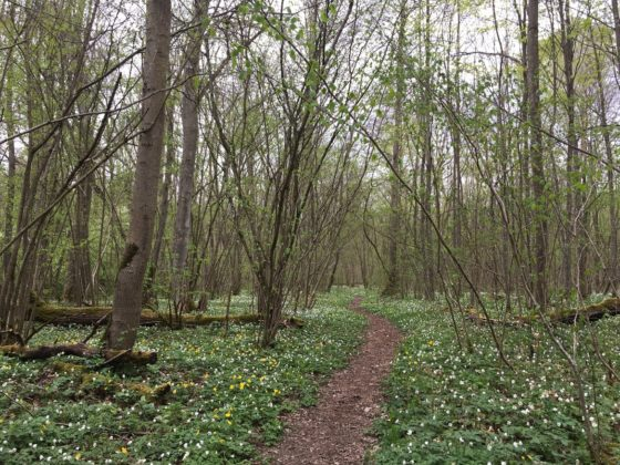 Naturlehrpfad Riedholz