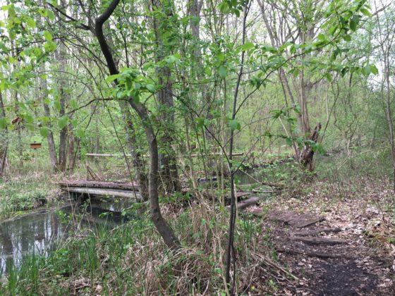 Brücke am Naturlehrpfad Riedholz
