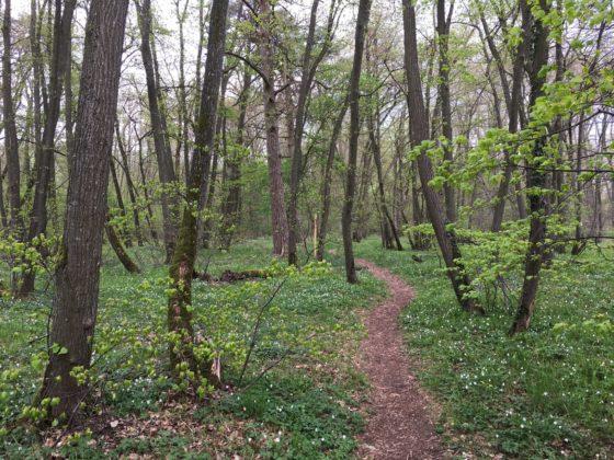 Naturlehrpfad im Riedholz