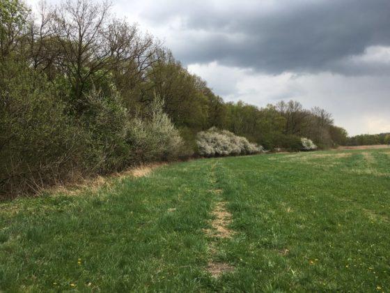 Naturlehrpfad Riedholz bei Grettstadt