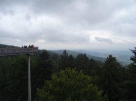 Aussichtsplattform Waldwipfelweg in Sankt Englmar