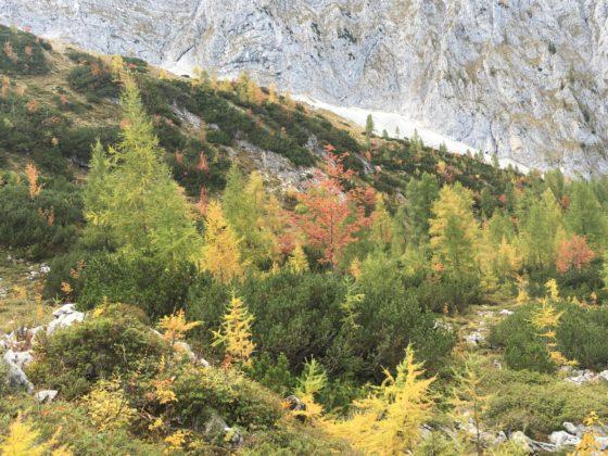Wimbach-Hochalm: Abstieg