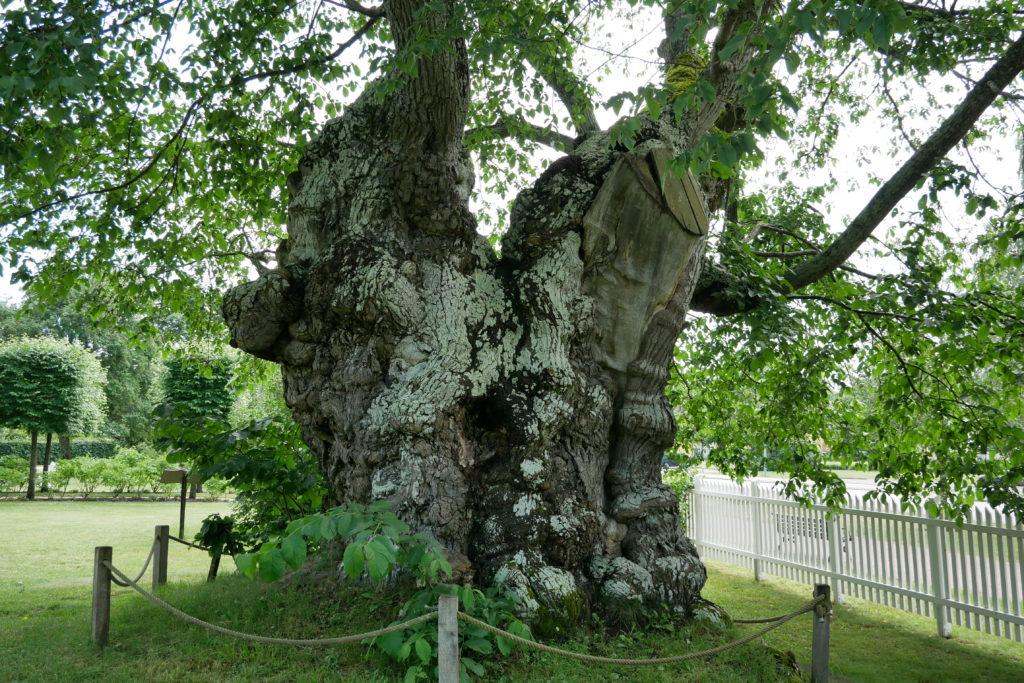 Limonadenbaum Pippi