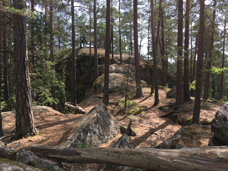 Wohnmobil-Reise durch Süd-Schweden: Tiveden Nationalpark