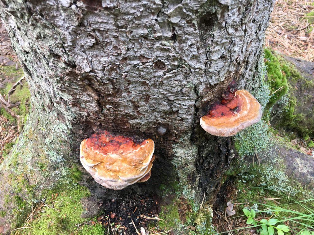 Tiveden Nationalpark Pilze