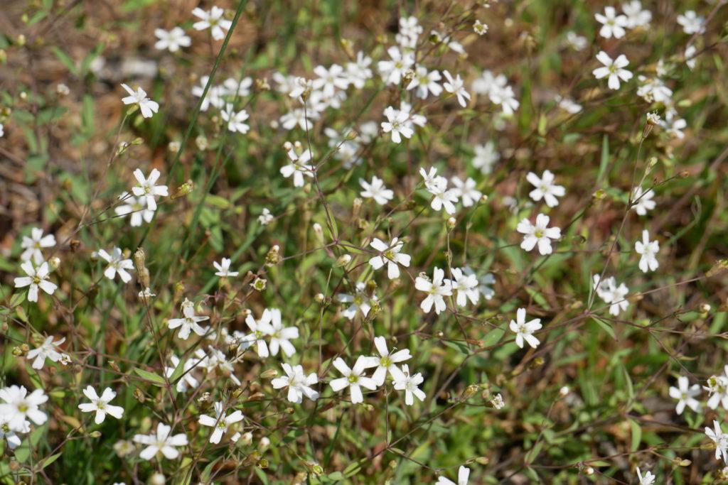 Tiveden Nationalpark Blumen